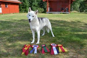 Frosta Champion