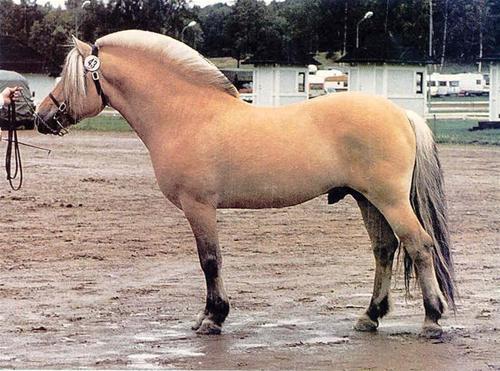 Dalar 154 -94