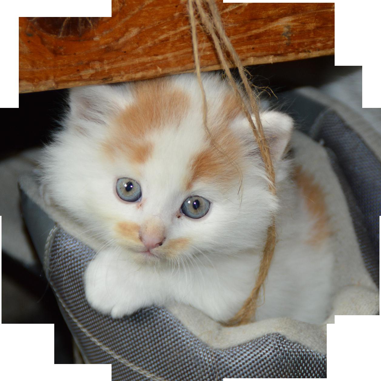 cat-451377_1920
