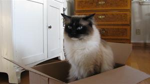 Cassy vill flytta 8v
