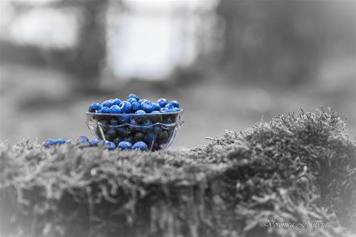 Blå dröm