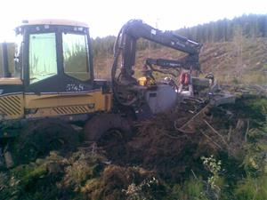 Ecol Log 574B