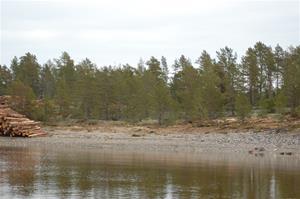 Avverkning på ö