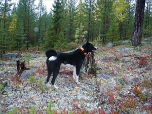 Semlan 18 månader i Alviksskogen