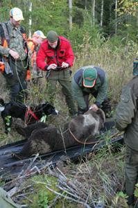 Björnen uppspårad september 2010