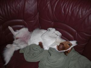softar i soffan