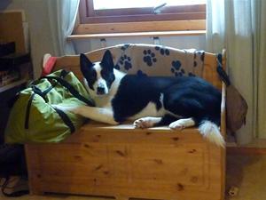 Azzar vilar ut på husses hemmakontor