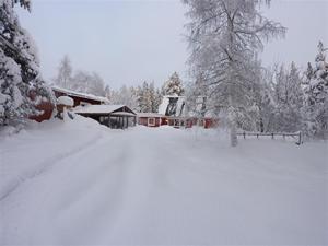 Gården 23 januari 2011