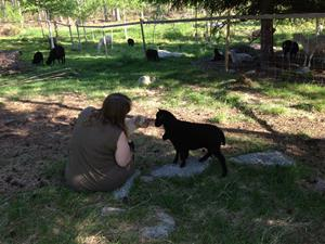 Camilla med fåren i hagen