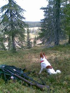 Tintin drömmer om fågel i Vittjåkks urskogar