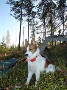Tintin hösten 09