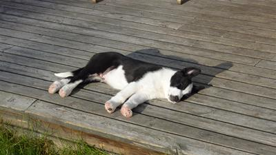 Azzar vilar ut efter första dagen på gården