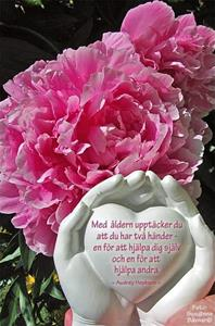 FB_IMG_1464095341153