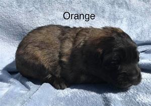 s_2_orange_1