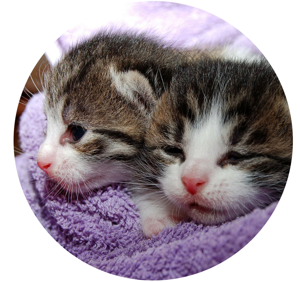 Nyfödda kattungar