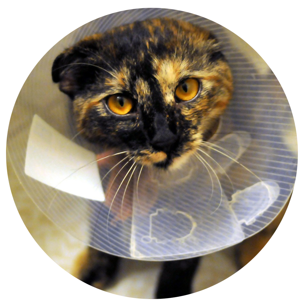 Katt veterinär Nynäshamn