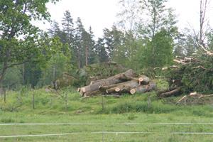 Ta ner träden 018