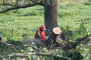 Ta ner träden 005