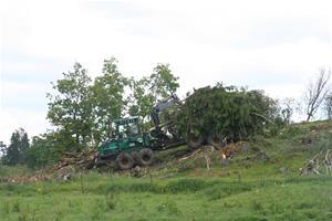 Ta ner träden 013