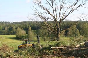 Ta ner träden 002