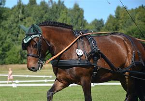 Johannesberg körtävling 240813 151