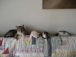Fanny med sina kattungar