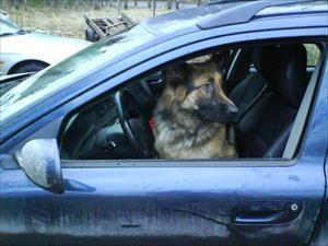 Eddy kör bil
