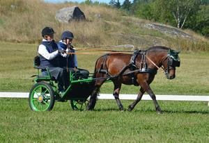 Johannesberg körtävling 240813 132