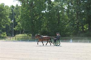 Granö tävlingar 2013 038