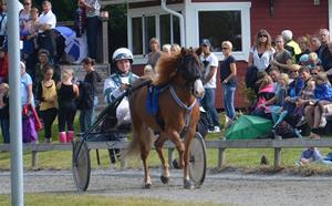 Hästensdag 310813
