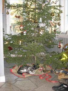 Jul på Granö