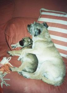 Davy & Daisy