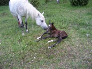 Illuztra pussar på sin bebis