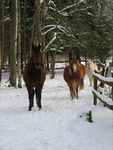 Stona i vinterhagen