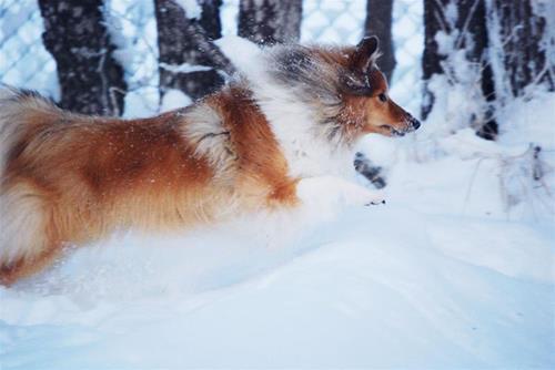 nellie i snön