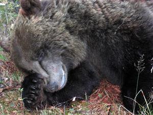 05.Björnen sover
