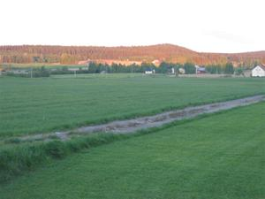 Sommar i Bursiljum005