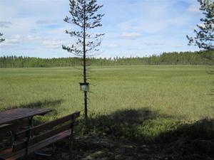 Baltjärn 274