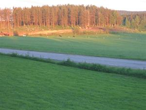 Sommar i Bursiljum004