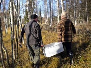 """18. Tung harrtransport genom björkskog vid Gammelrodforsen """"Karl Isbergs forsen"""""""