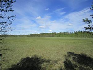 Baltjärn 279