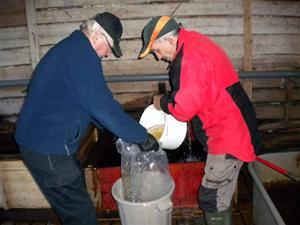 6. Harren hälls i vattenfyllda plastsäckar
