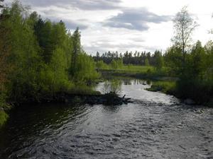 Sommar i Bursiljum029
