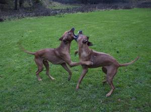 Louie och Ayla!
