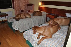 Enya, Indra, Nansi och Zolo på hotellrummet i Göteborg:)