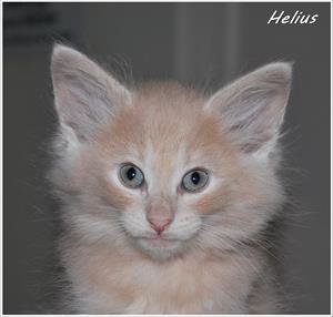 Helius 8v