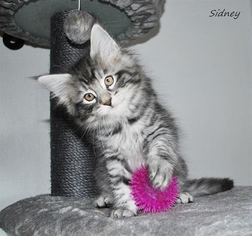 Sidney 8v c