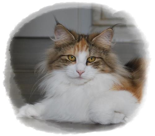 Katterna 012