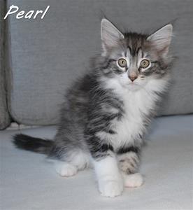 Pearl 9v b