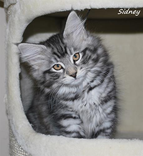 Sidney 10v